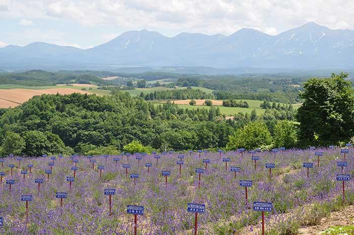 かみふらの八景・深山峠の写真