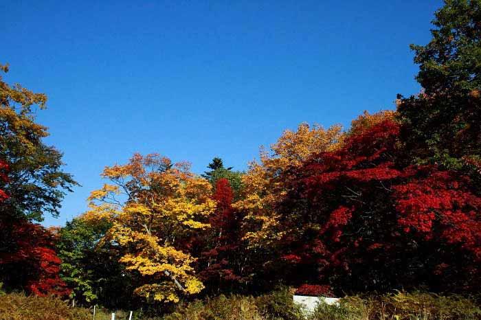 紅葉谷の紅葉の写真1