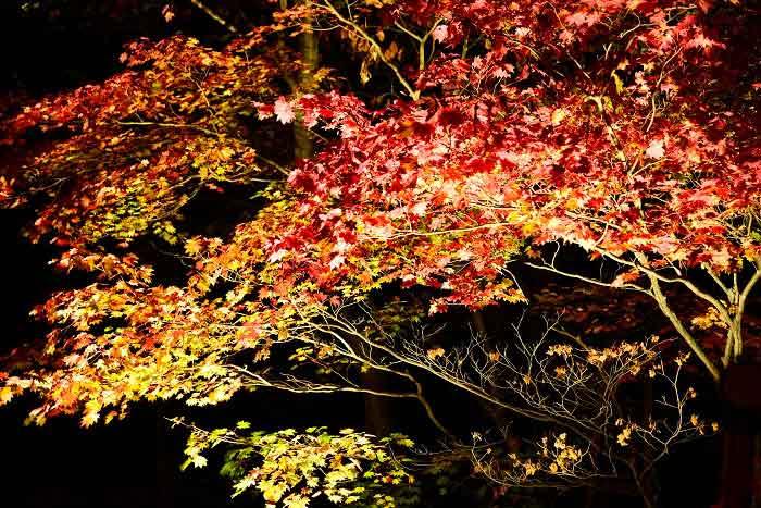 紅葉谷の紅葉の写真2