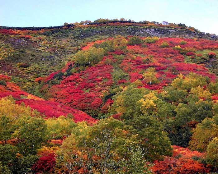 赤岳銀泉台の紅葉写真